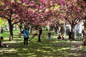les jardins de brooklyn