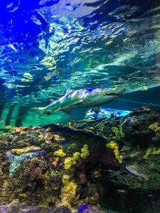 Ripley's aquarium of Canada à toronto