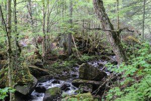 forêt parc jacques cartier