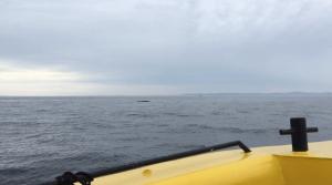 observation des baleines de tadoussac